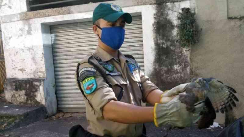 Isolamento social diminui resgate de animais silvestres no Rio: cerca de 4 por dia