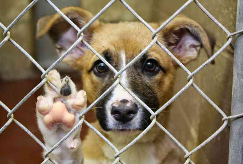 Câmara de Mossoró (RN) endurece punição a abandono e maus-tratos contra animal