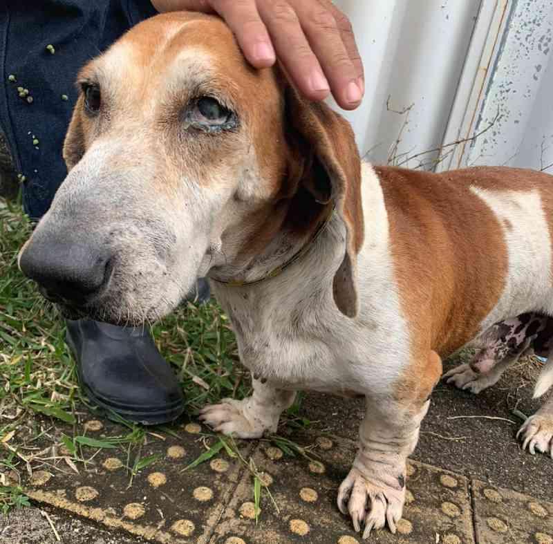 Cães foram resgatados na Grande Natal — Foto: Divulgação