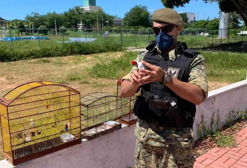 Guarda Municipal resgata pássaros nas feiras livres de Felipe Camarão e Igapó, em Natal, RN