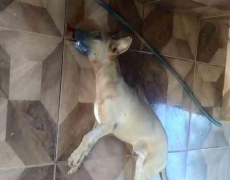 Matança de cães a tiros deixam moradores revoltados em Cabixi, RO