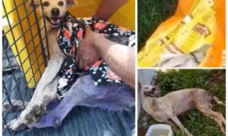 Cachorro morre após ser abandonado dentro de saco em rua de Porto Velho, RO