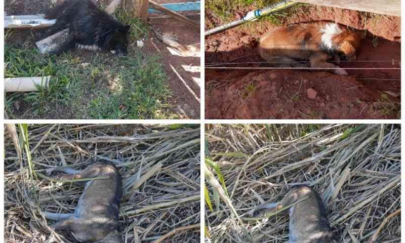 Cães são mortos por envenenamento no Caverá, em Alegrete, RS