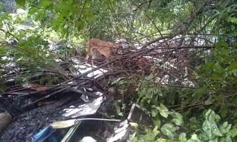 Vídeo: cadela que sofria maus-tratos é resgatada em Estância Velha, RS