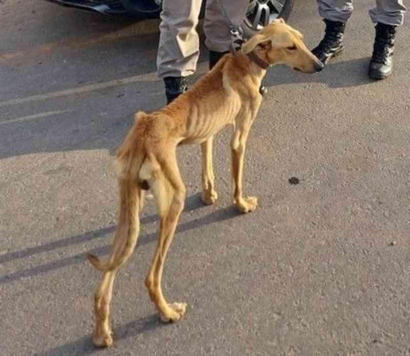 Brigada Militar de Taquari (RS) resgata cães de maus-tratos