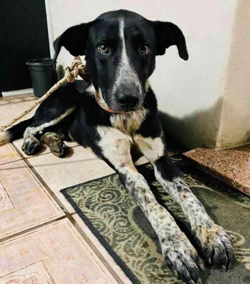 Cão arrastado está com a Associação Montenegrina dos Guardiões dos Animais (Amoga)