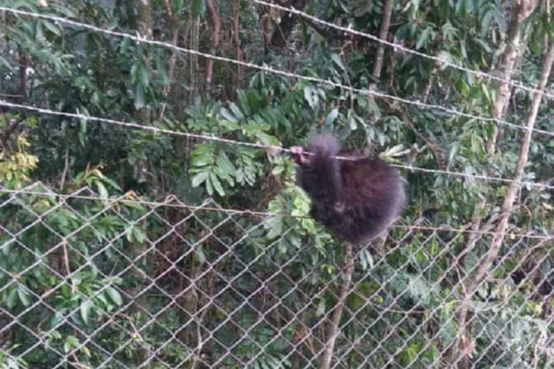 Bombeiros resgatam filhote de macaco-prego que ficou preso em cerca em Santa Cruz do Sul, RS