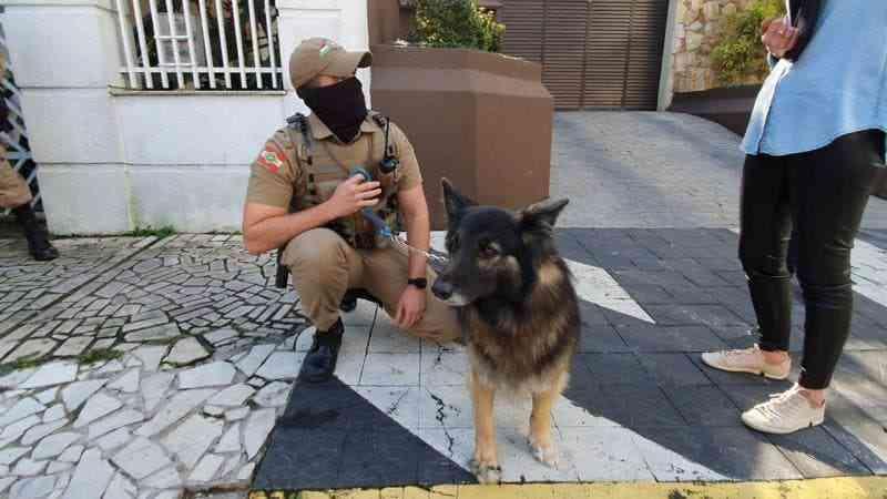 Cachorro deixado sozinho em casa há mais de um mês é resgatado pela PM em Blumenau, SC
