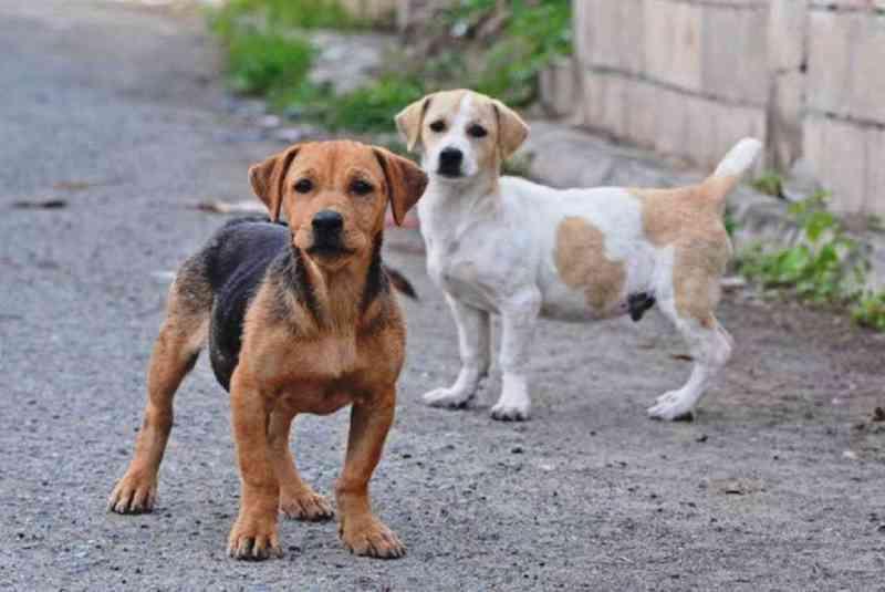 Forquilhinha (SC) terá programa para controle populacional de cães e gatos