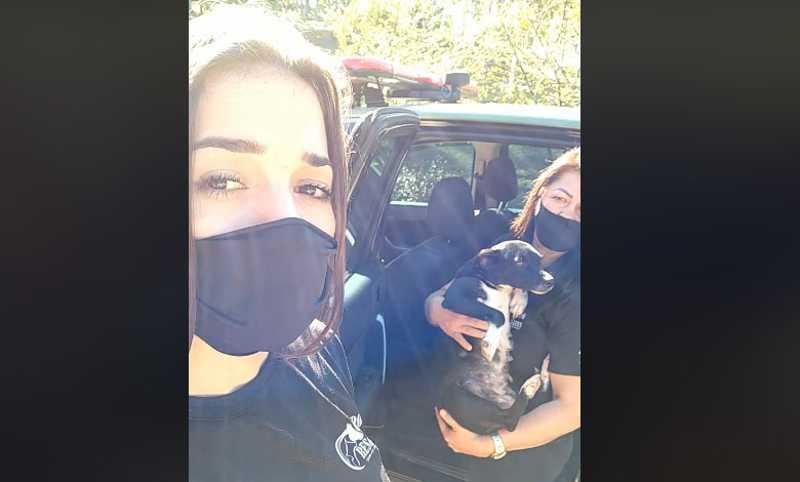 Homens tentam castrar cadela com alicate e faca em Canoinhas, SC