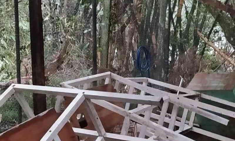 Ciclone em SC destrói recintos e mata espécimes em Centro de Triagem de Animais Silvestres