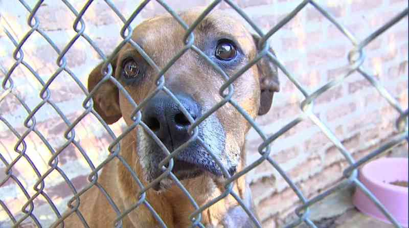 Decreto em Araraquara (SP) aumenta punição em casos de maus-tratos e abandono de animais