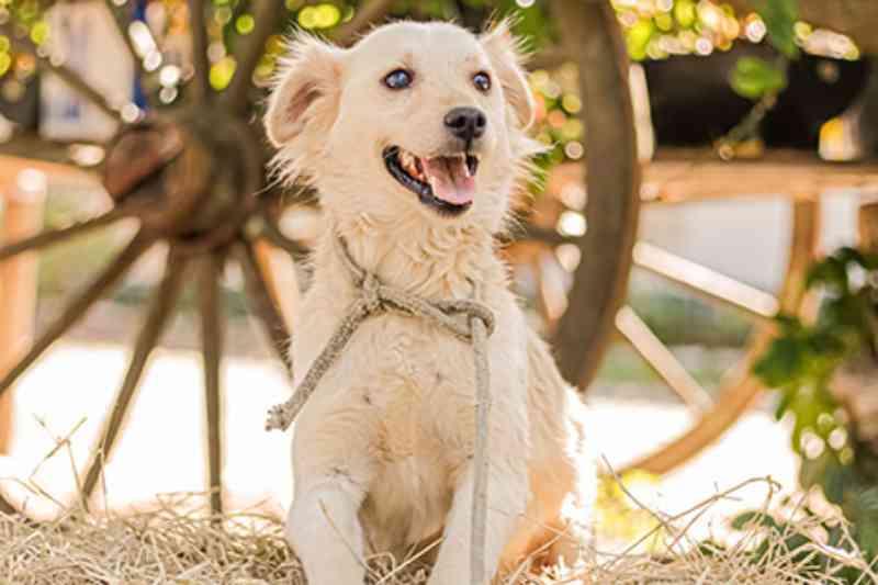 Prefeitura de Itapevi (SP) lança site pra adoção de animais