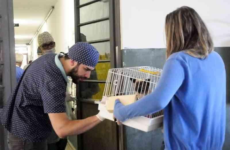 Prefeitura de Jundiaí (SP) cria novo sistema para moradores cadastrarem cães e gatos para castração