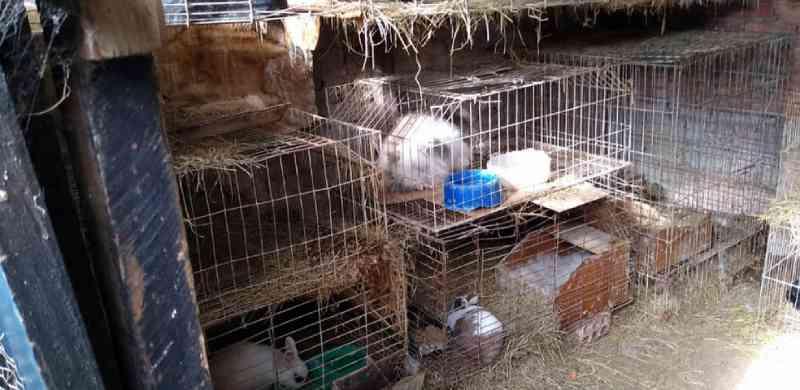 Polícia Ambiental resgata 85 animais em Leme (SP) e aplica multa de R$ 255 mil por maus-tratos