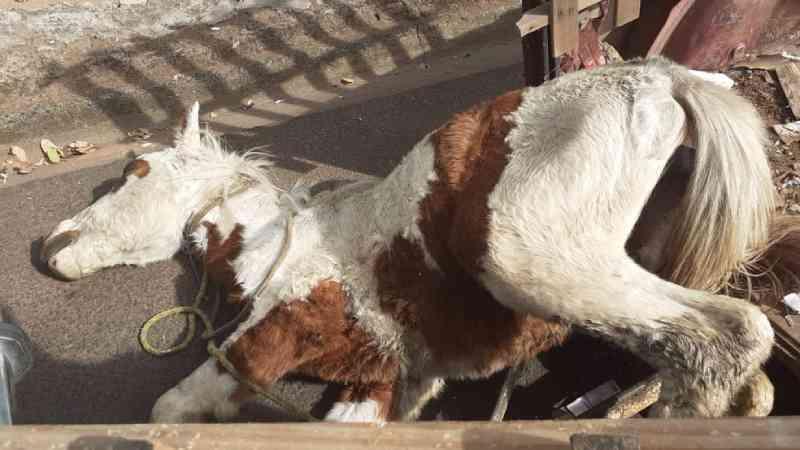 Prefeitura de Matão (SP) sanciona lei que proíbe uso de animais para condução de carga no município