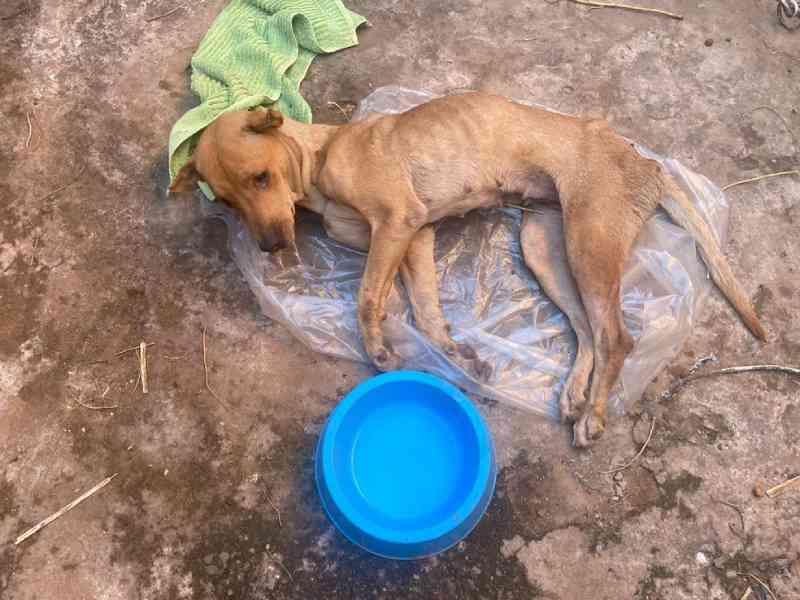Cadela em situação de maus-tratos é resgatada pela Polícia Ambiental em Novo Horizonte, SP
