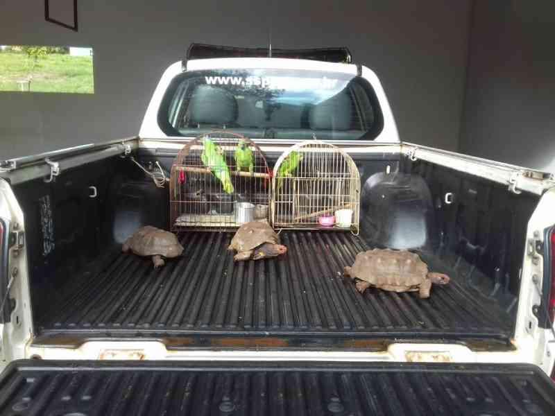 Moradora de Panorama (SP) leva multa de R$ 3,5 mil por manter aves silvestres e jabutis irregularmente em cativeiro