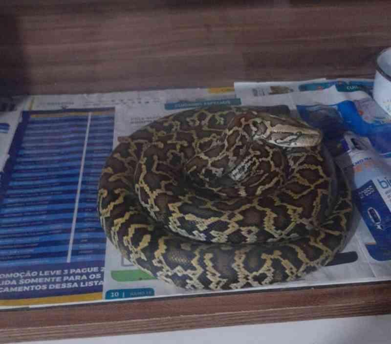 Homem é preso por manter cobras, lagartos e tartarugas sem autorização em Pindamonhangaba, SP