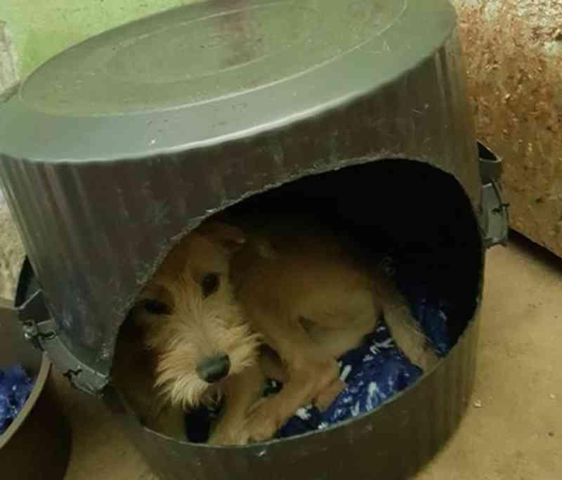 Canil municipal de Pirassununga (SP) arrecada cobertores e mantas para animais