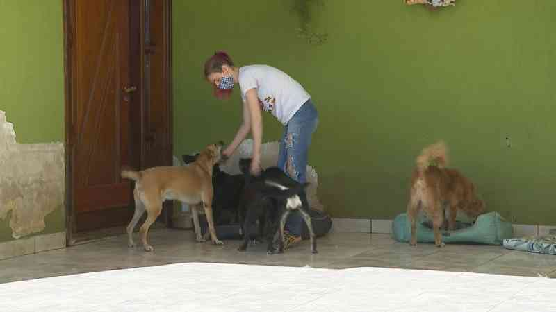 ONGs que cuidam de animais pedem ajuda para manter atendimento na quarentena em Ribeirão Preto, SP