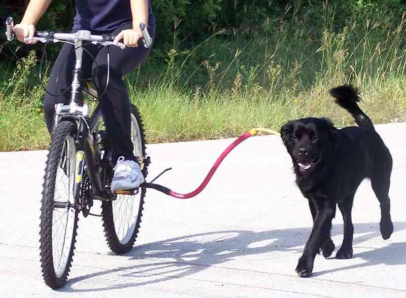 Projeto quer multar em R$ 1 mil ciclistas que passeiem com cães enquanto pedalam em Santos, SP