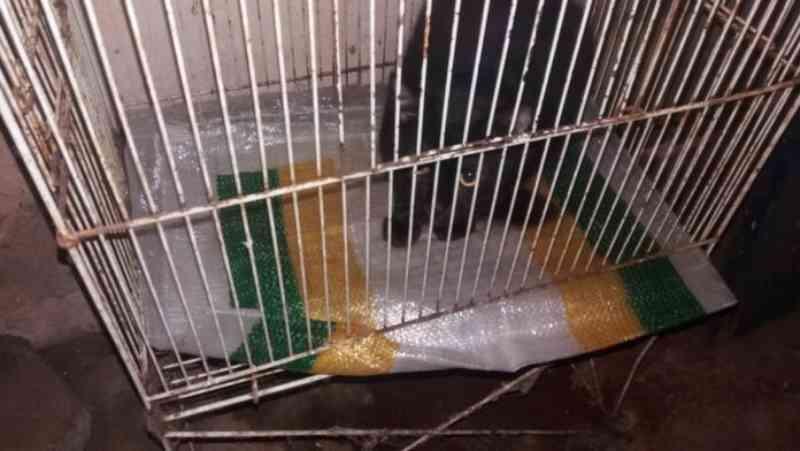 Gatos, cães e aves são vítimas de maus-tratos em Ubatuba, SP