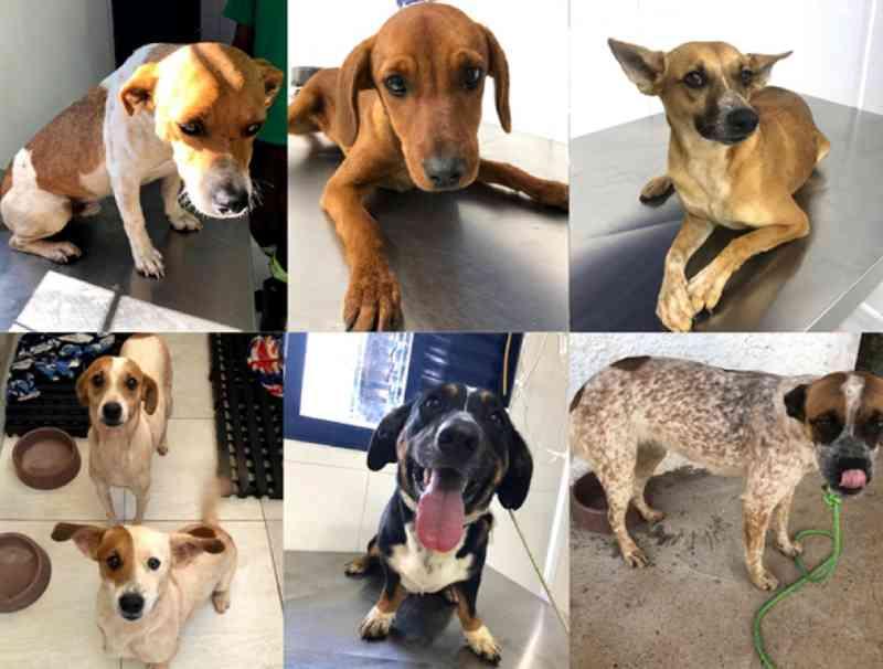 Projeto de concessionária recolhe cães abandonados em rodovia de SP; um já encontrou novo lar
