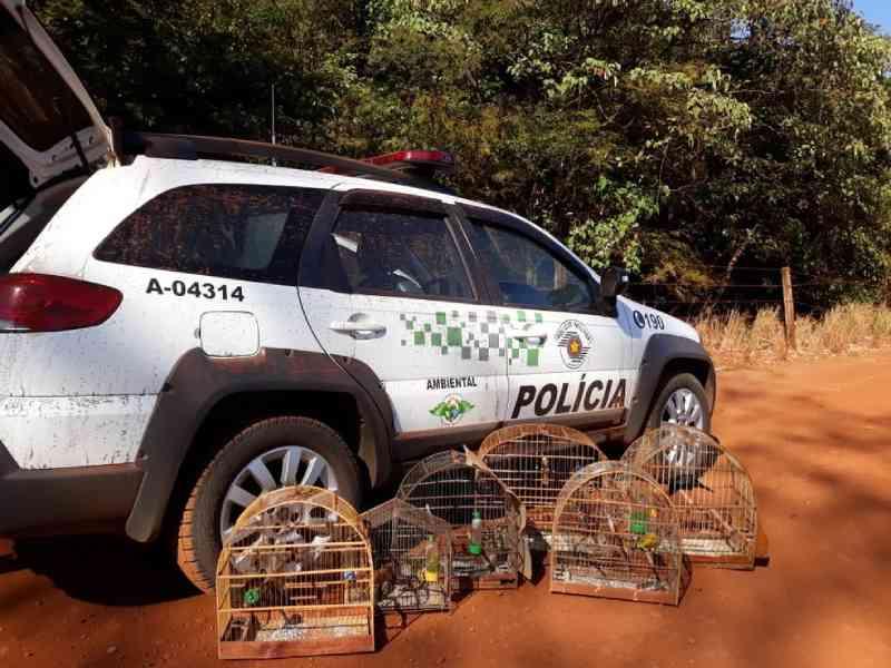 Homem é multado em R$ 46 mil suspeito de manter aves silvestres em cativeiro em Colômbia, SP