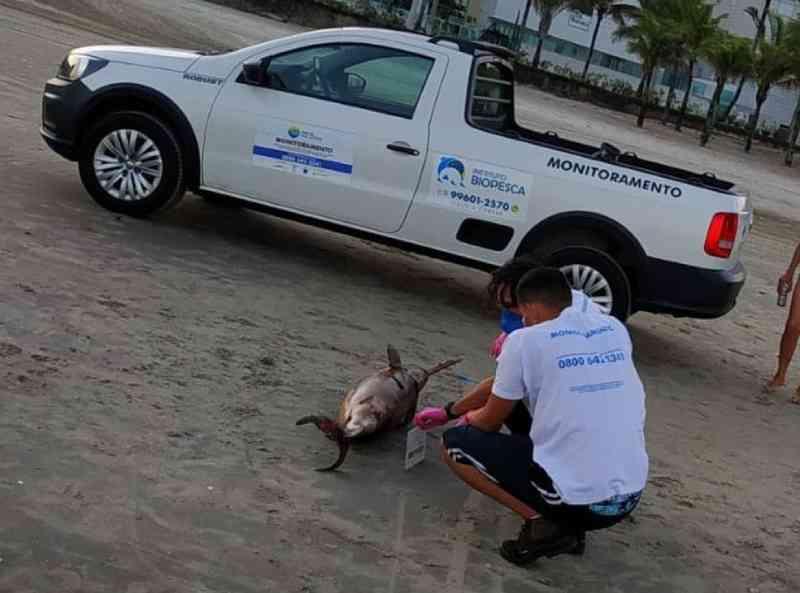 Toninha com sinais de ferimentos é encontrada morta no litoral de SP