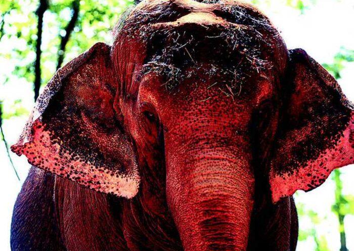 Olhar Animal participa de ação pela libertação da elefanta Bambi do zoológico de Ribeirão Preto, SP