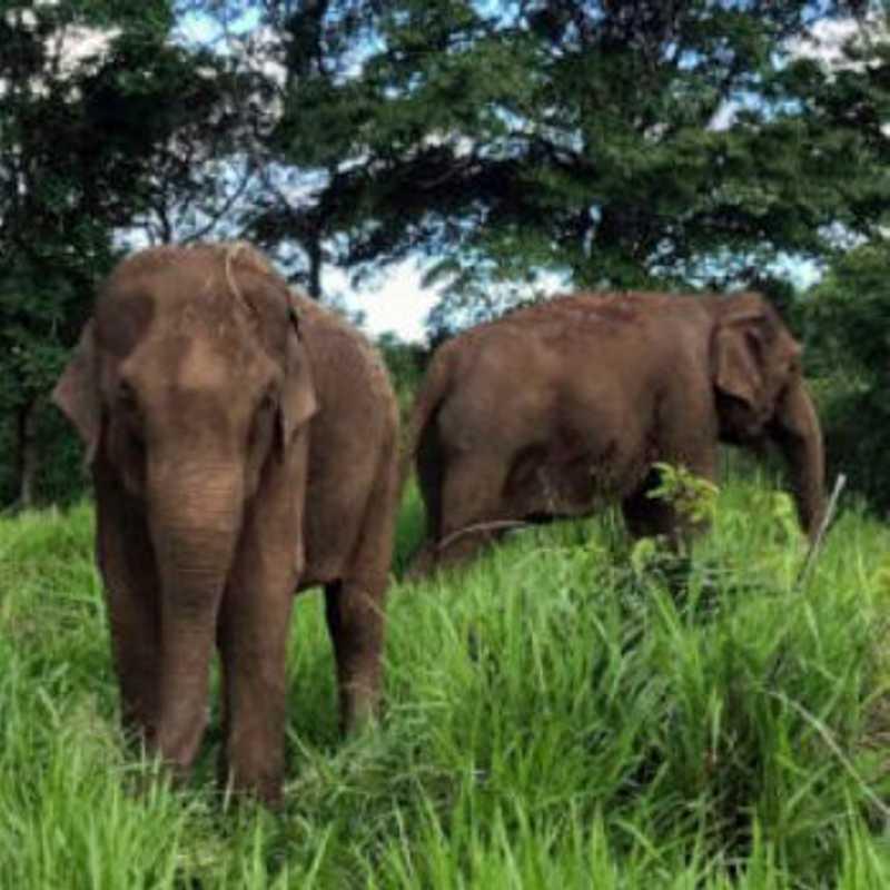 Elefantas Maia e Guida.