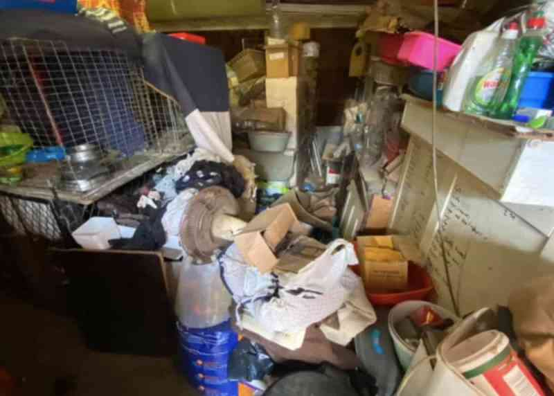 Animais encontrados em 'condições deploráveis' em abrigo na Cidade do Cabo, África do Sul