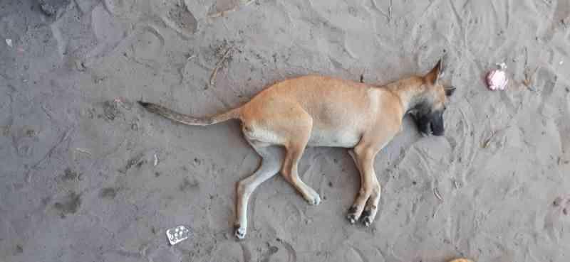 Homem é autuado por maus-tratos após invadir casa e matar cachorro sufocado em Tocantins