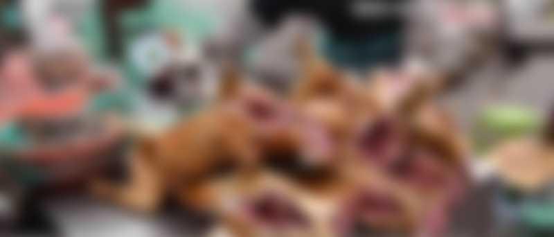 Vídeo aterrorizante de mercado de animais no Vietnã mostra sapos vivos cujas patas são cortadas com tesouras e cachorros assados nas mesas