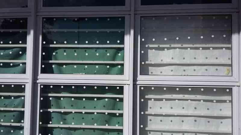 Pesquisa aponta que adesivos circulares podem ser mais eficientes para evitar a colisão de aves em janelas