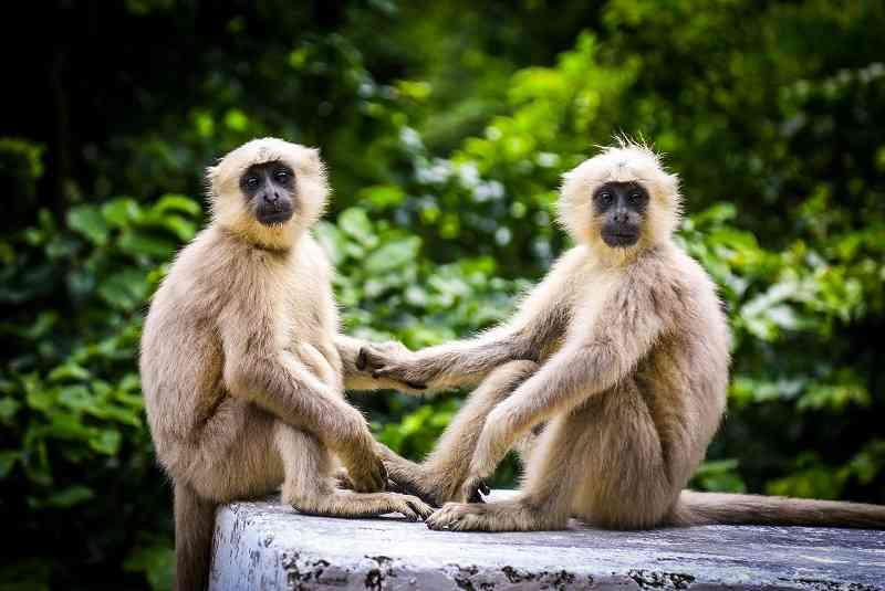 Amizade é um comportamento comum também entre os animais