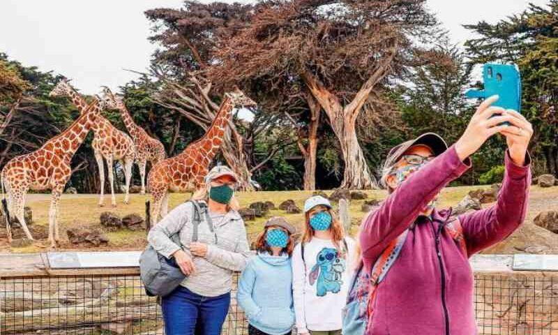 Queimadas: filhotes de onça-parda e tamanduá órfãos recebem tratamento no zoológico de Rio Preto, SP