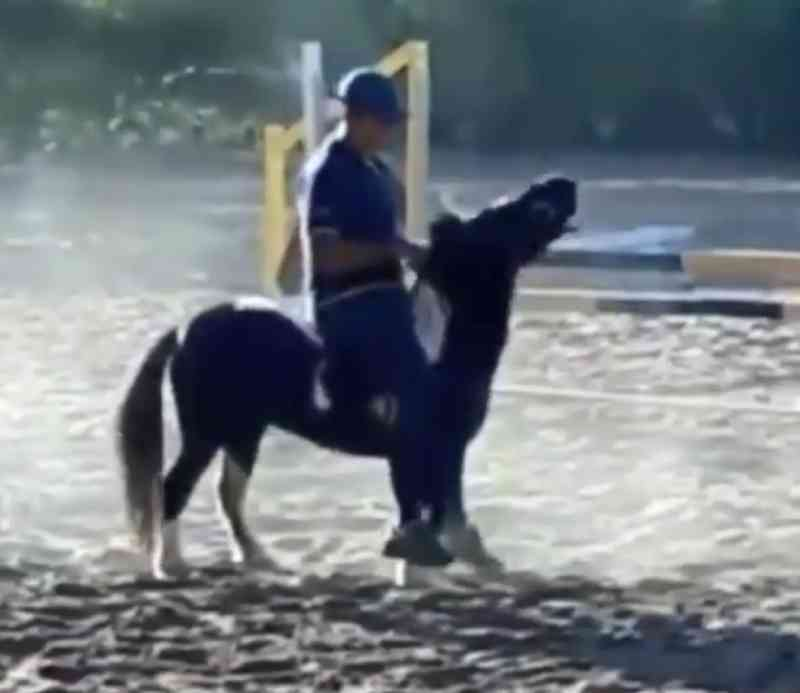 Cavaleiro olímpico aparece agredindo pônei em vídeo causando revolta na internet