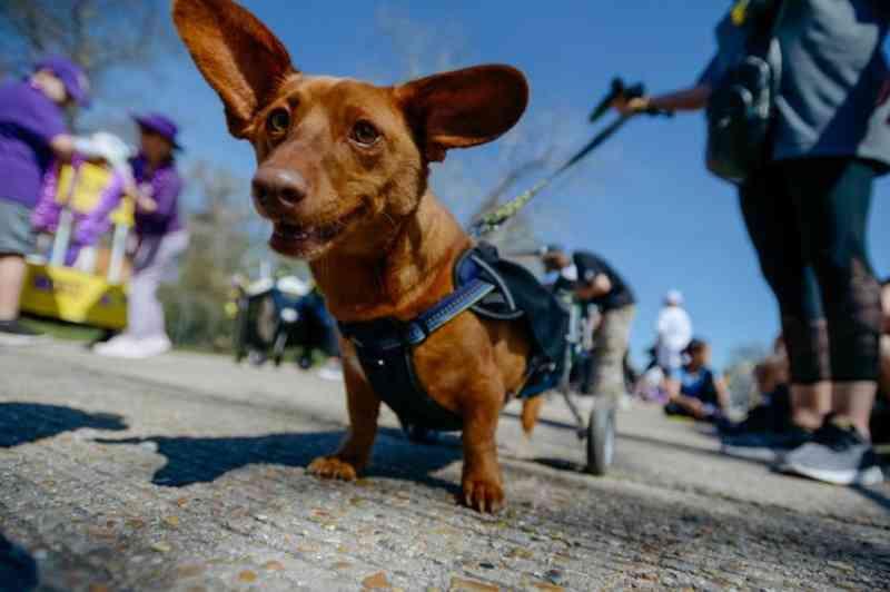 Mulher se declara culpada de crueldade contra animais no caso do cachorro cujas patas foram cortadas