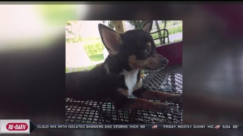 Homem condenado a cinco anos de prisão por maltratar e matar cachorro em Springfield, EUA