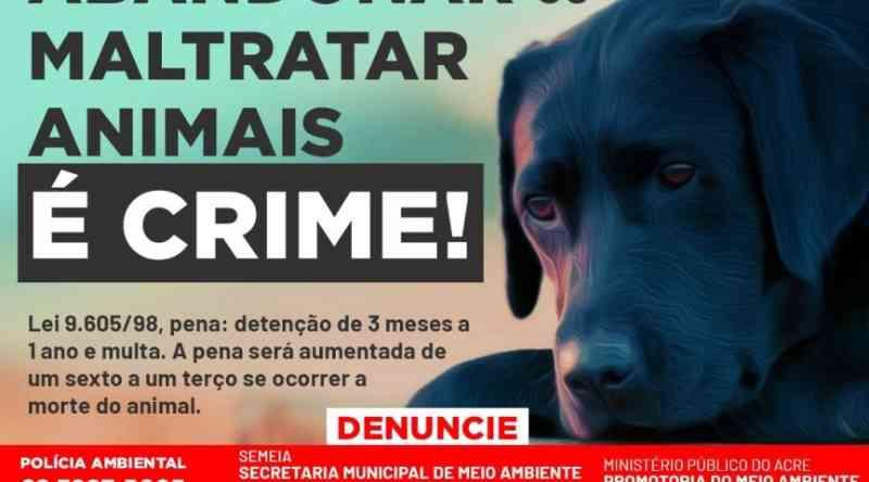 OAB/AC inicia campanha contra abandono de animais durante a pandemia