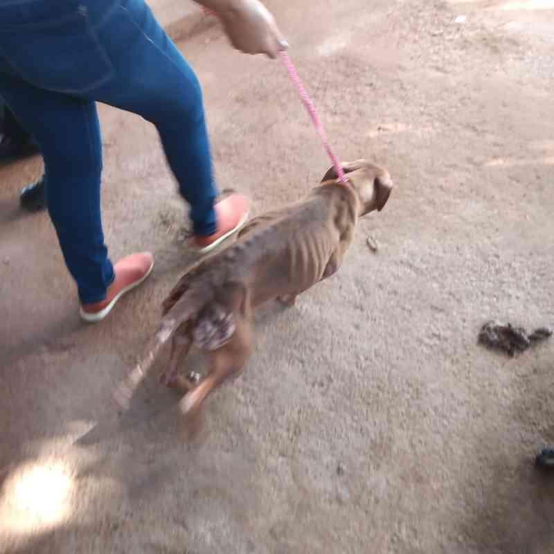 Cão morto a pauladas e pets sem comida em Macapá (AP) estão entre maus-tratos registrados em julho