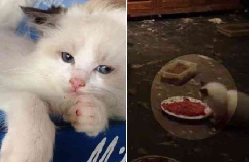 Polícia encontra casa com 118 gatos, fezes e filhotes mortos