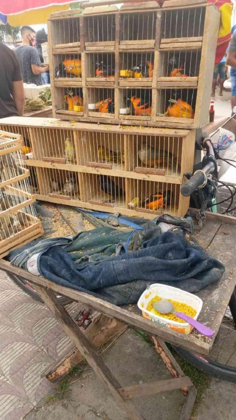 Mais de 150 animais silvestres são resgatados em Feira de Santana, BA