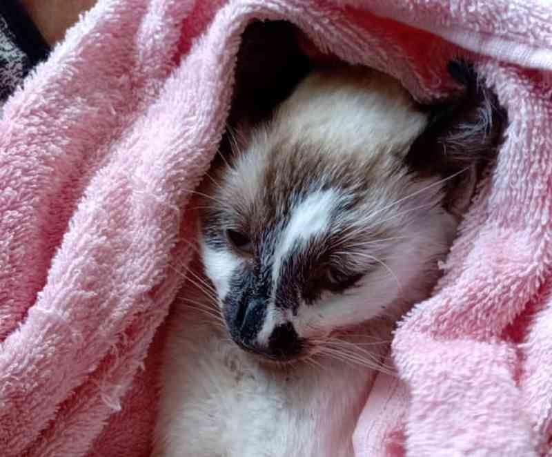 Protetores de animais denunciam mortes de gatos em conjunto habitacional de Salvador (BA); há suspeita de envenenamento