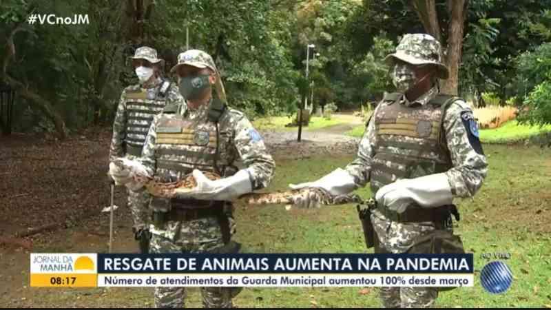 Resgate de animais em Salvador (BA) tem aumento de mais de 100% durante a pandemia
