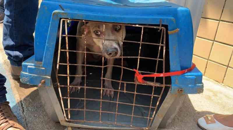 Abrigo com 40 cachorros pega fogo e quatro animais morrem em Fortaleza, CE