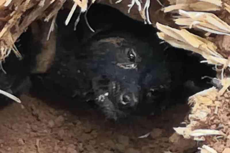 Cão sobrevive 37 dias debaixo de escombros de um deslizamento e é resgatado na China