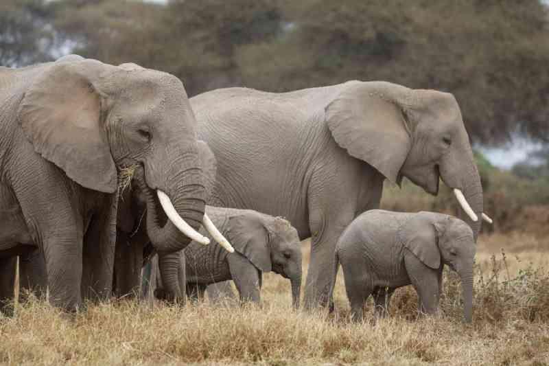Caçador de elefantes no Congo é condenado a 30 anos de prisão